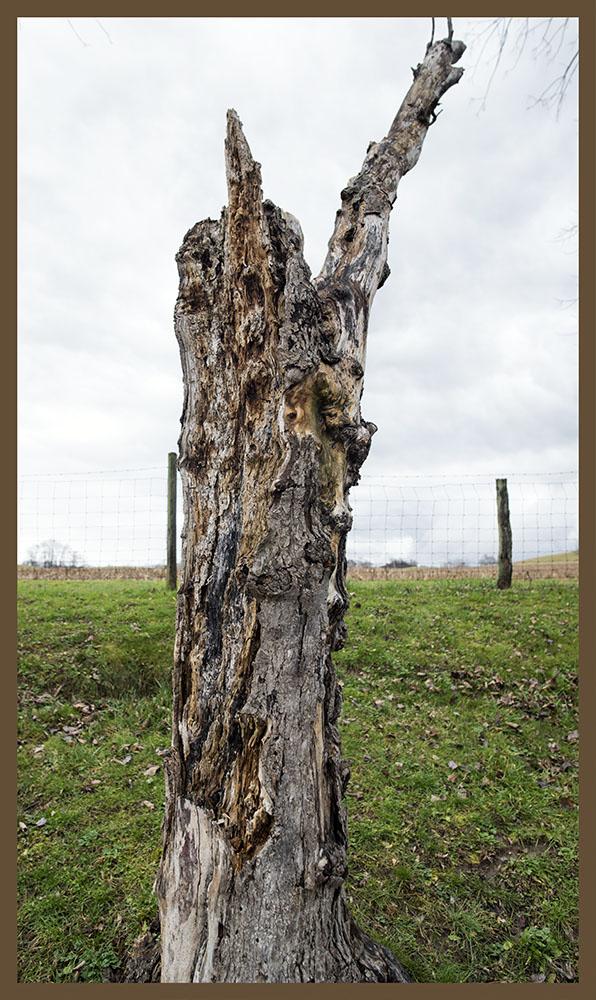 tree as person, philadelphia graveyard