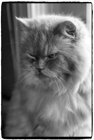 moodycat1