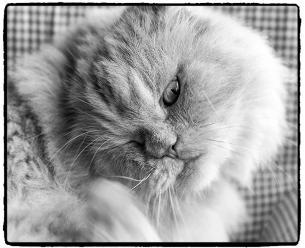 moodycat2