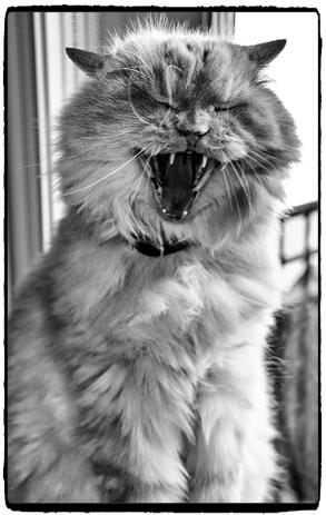 moodycat3