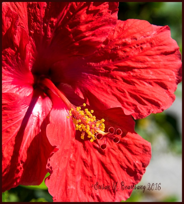 redflower2