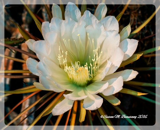 flower2_Fotor