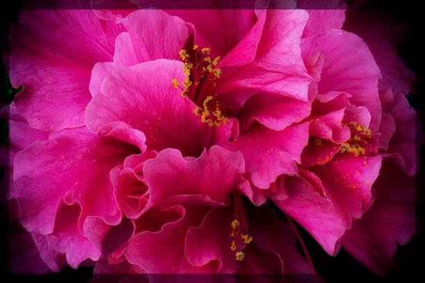 fullflower2_Fotor