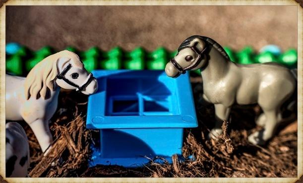 horses_Fotor