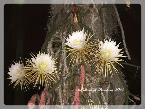 treeshot_Fotor