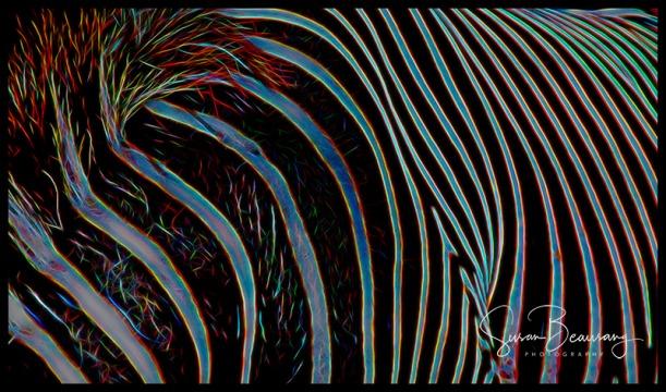 Zebra. Lowry Park Zoo, Tampa Fl
