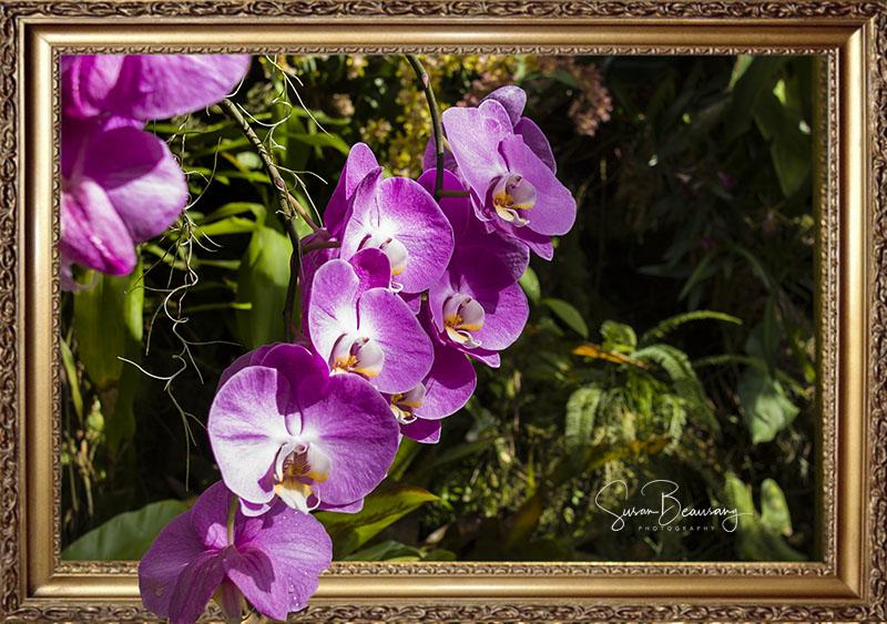 Selby Gardens,Sarasota FL