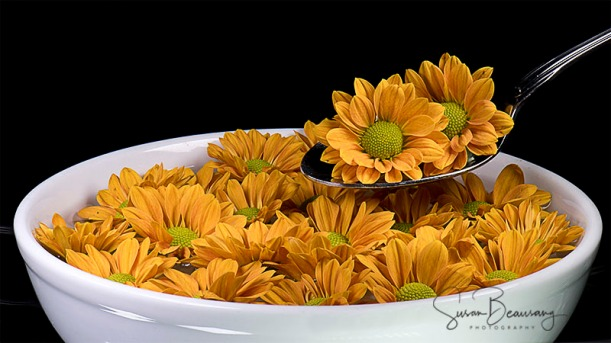 Bowl of Daisy's White Bowl,Yellow Daisy's