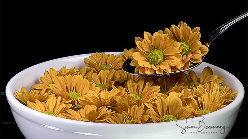Bowl of Daisy's White Bowl,Yellow Daisy's
