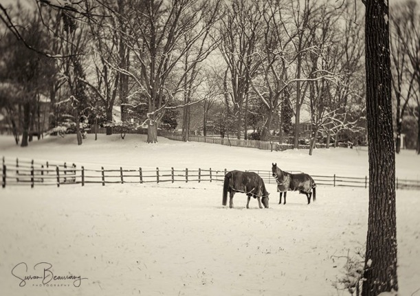 West Chester PA horse farm, snowy day