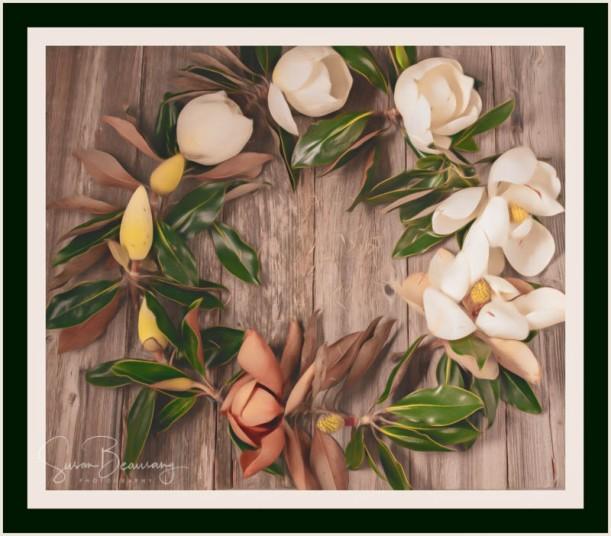 Magnolia, Magnolia Flowers, Ring of Magnolias, life of Magnolia