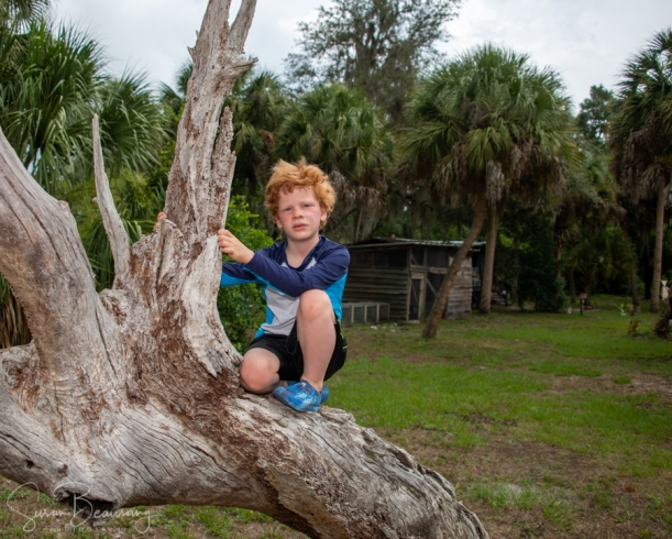 child playing in tree, Crawley Nature Center, Florida Fun, Tree climbing